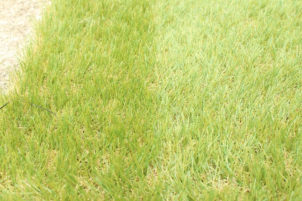 他社の人工芝の跡